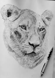 female lion drawing by robiartimre on deviantart