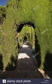 cedar tree hedges with arched entrances in an ornamental garden on