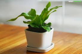 pflanzen für schlafzimmer zimmerpflanzen als natürliche einschlafhilfe und für gesunden schlaf