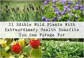 edibles flowers edible plants with extraordinary health benefits you can