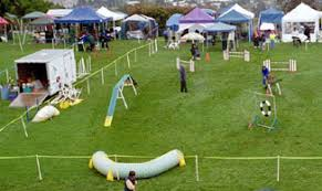 Backyard Agility Course Agility Dog Sport Obstacle Course Judged On Time And Accuracy