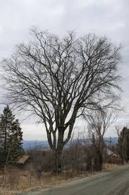 an elm tree dating service on outdoor radio vermont center for
