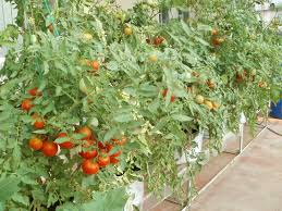 vegetable garden how to make terrace vegetable garden