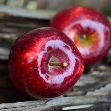 apple red all natural aged red apple balsamic vinegar condimento staunton