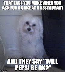 bichon frise meme annoyed dog imgflip