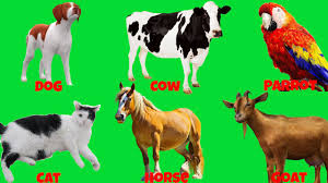 learn domestic animals sounds for children best way to learn