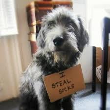 Dog Shaming Meme - dog shaming meme collegehumor post