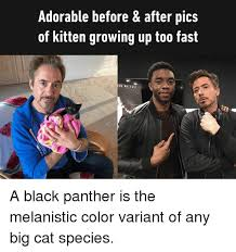 Before And After Meme - 25 best memes about before after before after memes