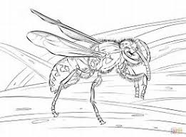 hd wallpapers wild coloring pages