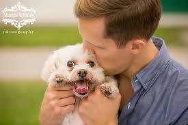 bichon frise nashville blog u2014 nashville dog photographer mandy whitley photography