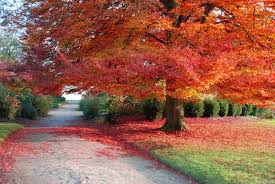 thanksgiving pictures for facebook cover autumn road places to go in my dreams pinterest autumn