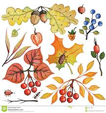 set of watercolor drawing insects stock vector image 49159272
