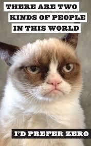 Success Cat Meme - grumpy cat a grumpy book by grumpy cat