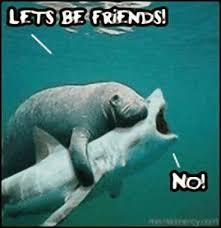 Sharknado Meme - kikka memes sharknado batman vs sharknado tornado de