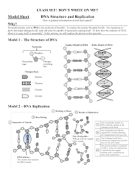 17 best images of dna structure worksheet answer key chapter 11