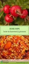 the 25 best medicinal plants ideas on pinterest growing plants