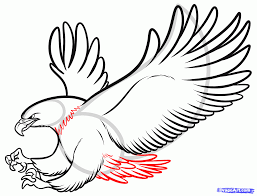 eagle drawing 133 126 eagle drawing tiny clipart