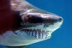 tropical fish wallpaper sea life wall murals wallsauce shark smile wall mural wallpaper