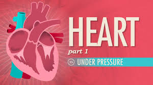 Anatomy Of The Heart Lab The Heart Part 1 Under Pressure Crash Course A U0026p 25 Youtube