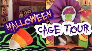 halloween fleece guinea pig halloween cage tour youtube