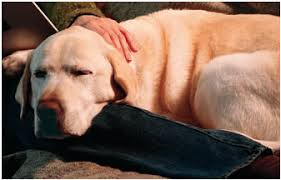 Temporary Blindness In Dogs Dog Health Care Epilepsy And Seizures In Dogs