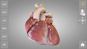 App For Anatomy And Physiology Heart 3d Anatomy Lite Android Apps On Google Play