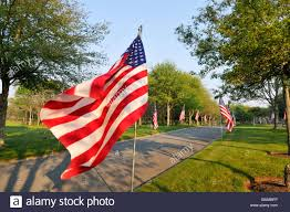 Usa Flag Cape American Flags Waving On A Tree Lined Street On Memorial Day At