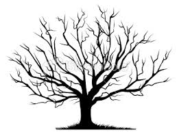 deciduous bare tree with empty branches black silhouette isolated on