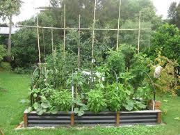 herb garden designs beginners margarite gardens