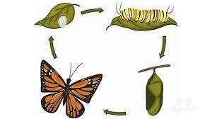 facts what does a butterfly eat tellmewhy educational
