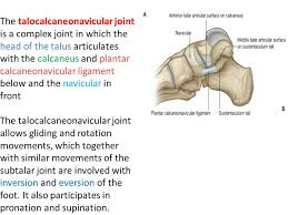 Talus Ligaments Ankle Joint Ppt Video Online Download