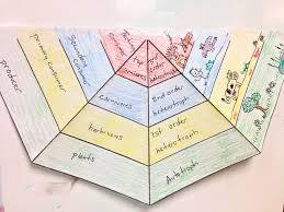 ecological pyramid worksheet worksheets