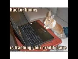 Funny Rabbit Memes - funny rabbit memes youtube