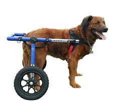 boxer dog on motorcycle amazon com dog wheelchair for large dogs 70 180 lbs by walkin