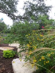 texas landscaping ideas landscaping pictures of texas xeriscape gardens and much more here
