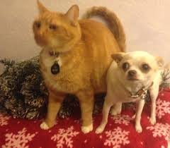 laguna hills animal hospital keepin u0027 kitties out of the christmas