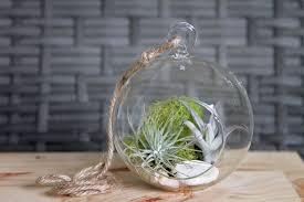 coastal air plant aerium kit indoor garden terrarium
