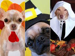 10 costumed dogs celebrating thanksgiving photos