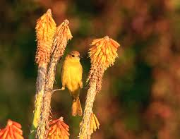 bird friendly native plants audubon birds in north america and europe are quickly packing their bags
