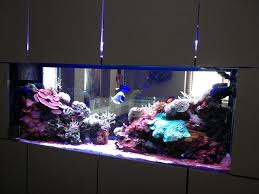 aquarium halloween 10 amazing aquariums submitted by our users nualgi aquarium
