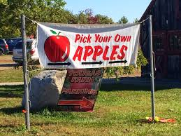 the andrew project apple picking at tougas family farm