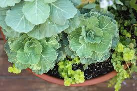 Patio Plants For Sun Fall Patio Plants U2014 When It Rains Paper Co Colorful And Fun