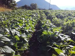 chambre d agriculture 04 matinée technique produire du soja en bio les agriculteurs bio