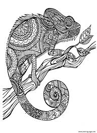 cameleon patterns coloring pages printable