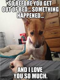 Cute Good Morning Meme - funny animal pictures of the day 27 pics sheps our best friends
