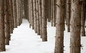 winter woods wallpaper 52dazhew gallery