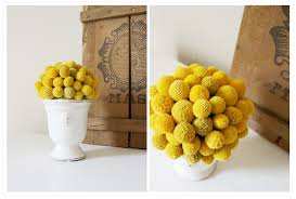 Billy Balls A Bit Of Yellow And Grey Wild Ink Press