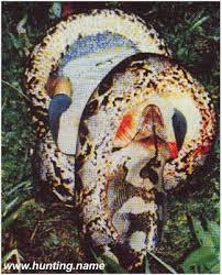 vidio film ular anaconda penakan ular raksasa di indonesia hoax kah