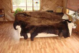 How Much Does A Bear Rug Cost Buckskin U0026 Buffalos