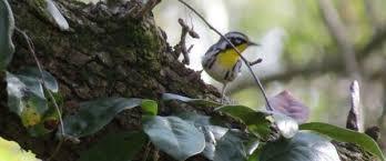 Backyard Wild Birds Scooter U0027s New Year U0027s Top Ten List Creating Backyard Habitats To